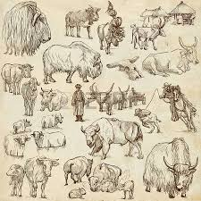 camels collection of an hand drawn illustrations description