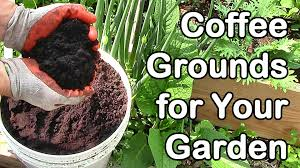 how much coffee do we use in the garden coffee grounds for garden