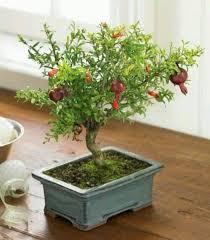 37 best green thumb indoors images on indoor gardening