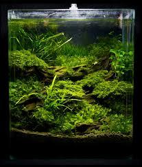 nano tanks google search acuario pinterest aquascaping