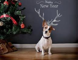 179 best jack russell my love images on pinterest jack russell