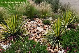 Xeriscape Landscaping Ideas Shirley Fox U0027s Golden Xeriscape Garden In San Antonio Diggingdigging