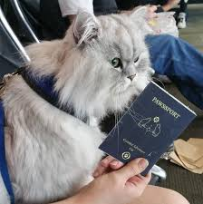 how to travel with a cat images Epic this traveling cat is on adventure around america and it jpg