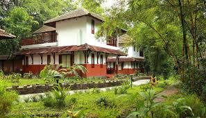 best tree house resort in wayanad kerala india
