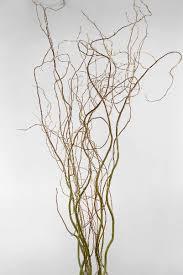 curly willow branches curly willow branches 36 40in 11 branches