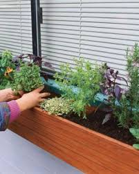herbs for every window box fine gardening