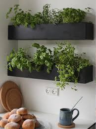 les herbes de cuisine cuisine plante de cuisine plante de cuisine plante de cuisines