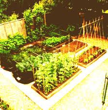 kitchen gardens design small kitchen garden design ideas vegetable perfect garden trends 2018
