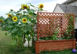 how to make a garden lattice the garden inspirations how to make a garden lattice bear dolly and moi building garden structures