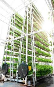 Vertical Farming Vs Farming Vertically