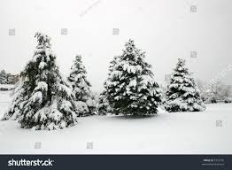 snow covered evergreen trees on frosty stock photo 7373776