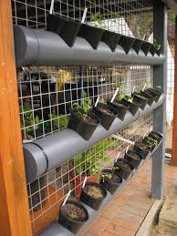 entrancing vertical vegetable garden bangalore and vertical