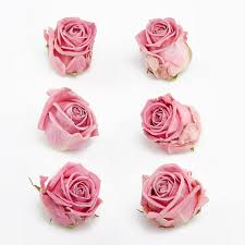 dried roses baby pink freeze dried heads petals roses