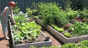 eartheasy blog5 secrets to a u0027no work u0027 garden eartheasy blog