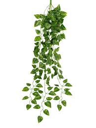 decorative plants for living room picture more detailed picture