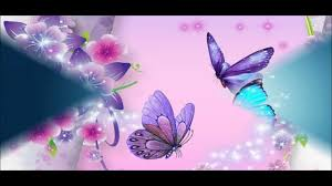 beautiful butterfly wallpapers hd pictures
