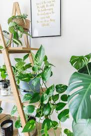 indoor plant guide 5 beginner plants you can u0027t kill k is for kani