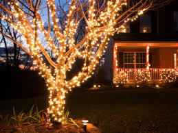 outdoor christmas lights tree branches rainforest islands ferry