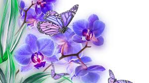 orchid tag wallpapers insects orchid flowers butterfly
