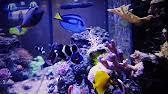 Okeanos Aquascaping Custom Coral Reef Aquariums By Okeanos Aquascaping Youtube