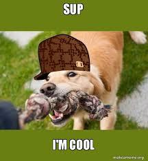 Sup Meme - sup i m cool scumbag dog make a meme