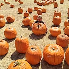 Pumpkin Patch Frisco Tx by Pumpkin Carving Ideas