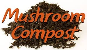 12 ways mushroom compost will improve your soil