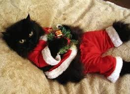 cat christmas christmas cat a a day