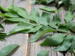 Curry Leaf Plant Diseases - indian cooking 101 curry leaves vs curry powder my heart beets