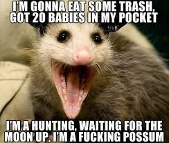 Possum In My Backyard Opossum Hashtag On Twitter