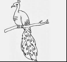 surprising peacock coloring pages with peacock coloring pages