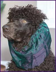afghan hound snood snoods and britches by dede selph