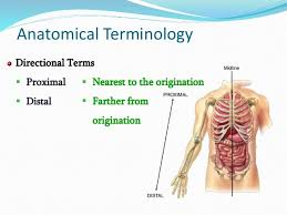 Directional Terms Human Anatomy Chapter 1 Introduction To Anatomy And Physiology