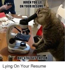 Cats Resume 25 Best Memes About Lie On Your Resume Lie On Your Resume Memes