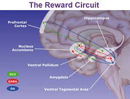 Part Of The Brain Stem That Is Involved In Arousal The Limbic System And The Reticular Formation