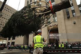 christmas tree delivery rockefeller center christmas tree delivered to nyc ahead of