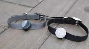 whistle the u0027fitbit for dogs u0027 adds gps features to make sure you