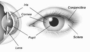 What Structure Of The Eye Focuses Light On The Retina Human Eye Anatomy Structure Of The Eye