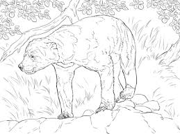 realistic sun bear coloring free printable coloring pages