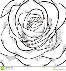 drawn rose black and white pencil and in color drawn rose black