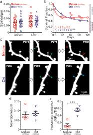 altered synaptic dynamics during normal brain aging journal of