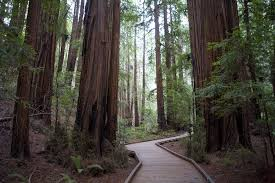 great trees of the world the oldest tallest and more
