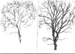 p98 drawing trees u2013 sketching an individual tree the milkman
