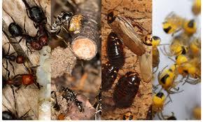 pest control news