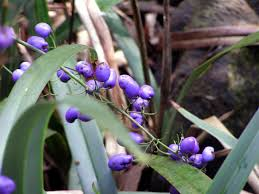 native plants in australia australian native plants a year in a gippsland garden