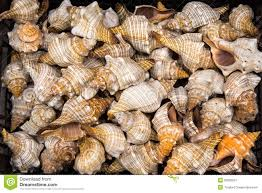 Where To Buy Seashells Seashells For Sale Stock Photo Image 21261190