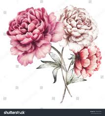 The Pink Peonies by Pink Peonies Watercolor Flowers Floral Illustration Stock
