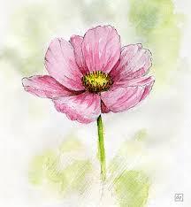 les dessins de daniel croquis d u0027une fleur sketch of a flower