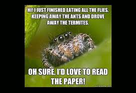 Cute Spider Meme - cute spider meme misunderstood spider meme 16 pics geek