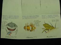 writing papers in biological sciences a three tab on symbiosis created by an amazingly artistic student a three tab on symbiosis created by an amazingly artistic student note that both